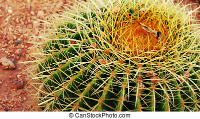 summer cactus with prickles - green summer cactus with...