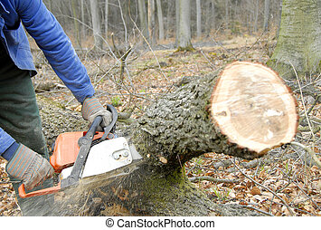 woodcutter - Man cuts tree with chainsaw