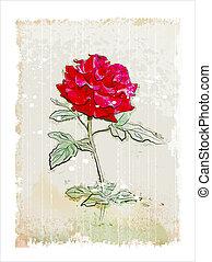 vintage red rose