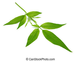 Medicinal Nishinda leaves - Vitex Negundo or Medicinal...