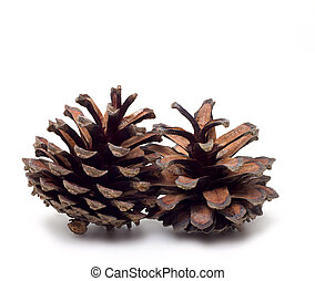 Pinecone - isolated on white - Two coupled cones on a white...