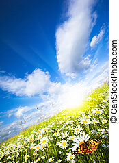 Charming summer - Panorama of solar meadow and ?utterfly on...