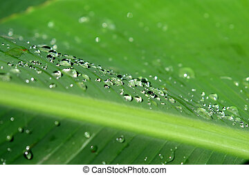 Dewdrops on green leaf