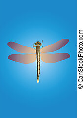 Dragonfly-full-length - The picture at full size dragonfly...