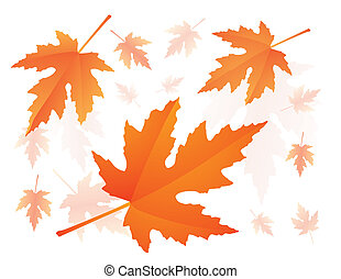 falling maple leaves - red autumnal falling maple leaves...