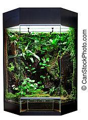 tropicais,  Terrarium, Animais estimação, floresta tropical
