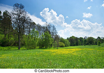 Green meadow with spring flowers