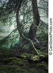 Magic forest - trees with moss in magic light and haze in...