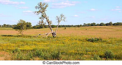 Nachusa Grasslands - Illinois - A vast prairie at Nachusa...