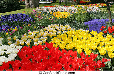 Flower bed in Keukenhof gardens - Spring flower bed