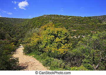 Footpath among the blossoming spring nature. The mountain Meron