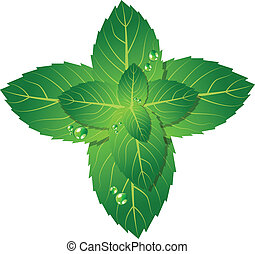 Mint leaf - Vector picture of mint leaf