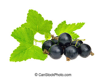 black currant isolated