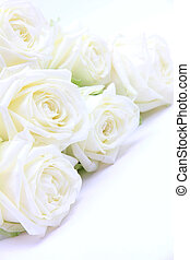 Beautiful white roses as wedding background