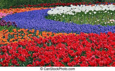 Flower bed in Keukenhof gardens - Multicolored flower bed