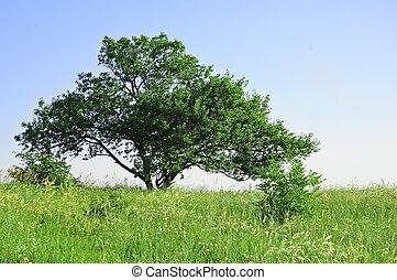 azul, árvore, capim, céu, verde