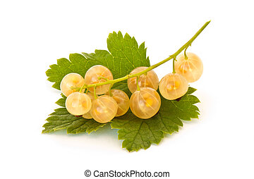 White currant - Yellow currant isolated on white background