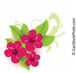 tropikus, virág
