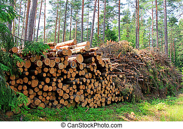 Wooden Logs and Wood Fuel Stacked in Forest - Wooden logs...
