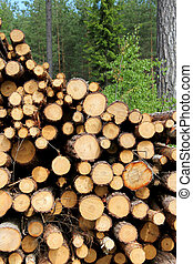 Cut Wooden Logs Stacked in Forest for Pulp or Energy - Close...