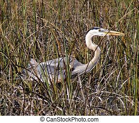 Wild egret in Everglades