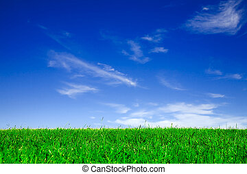 Empty field of green grass under clear blue sky