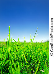 Grass and sky - Close up of green grass under clear blue sky