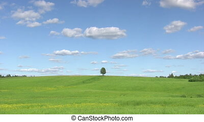 Solitary tree, summer landscape