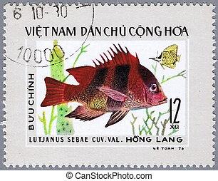 Lutjanus sebae - VIETNAM - CIRCA 1976: A stamp printed in...