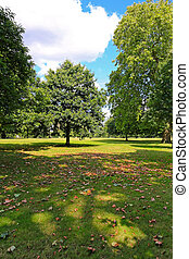 Park - Sunny summer afternoon in London Hyde Park