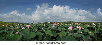 The Lotus flower ,     panorama, prospect