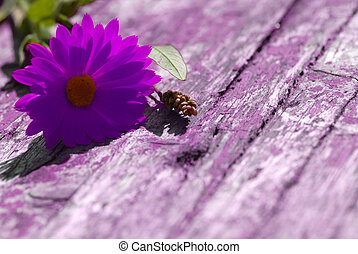 Daisy on wooden background with copy-space