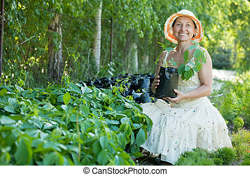 Mature woman with Parthenocissus tricuspidata sprouts in...