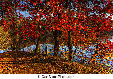 Autumn river bank in hdr - High Dynamic Range image of an...
