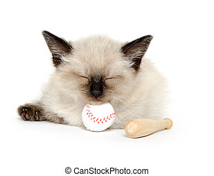 Cute kitten and baseball - Cute baby cat sleeping with toy...