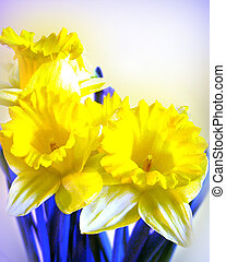 Daffodils blue yellow watercolor image and illustration...