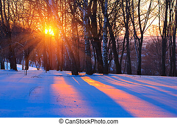Red sunset in a winter forest, Russia