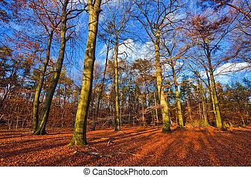 vibráló, kép, Ősz, Erdő, napnyugta