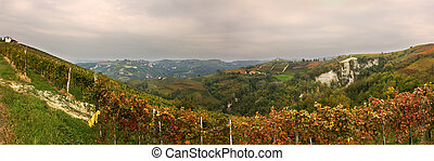 Panoramic view on vineyard.