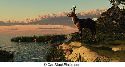 Deer Lake - A beautiful buck with his antlers makes a...