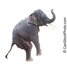 elephant isolated in white