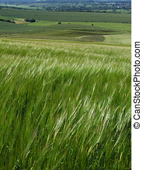 Fields Grass View - A view across fields and meadows with...