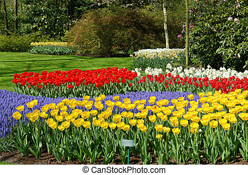 Flower bed in Keukenhof gardens - Spring flower bed in...
