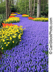 Flower bed in Keukenhof gardens - Flower bed, Keukenhof, the...