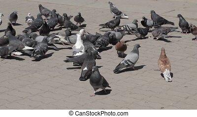Group of pigeons eating bread outdo