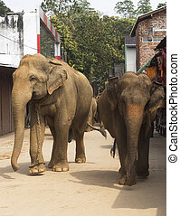 Elephants on the srtreet - Elephants walking on the srtreet...