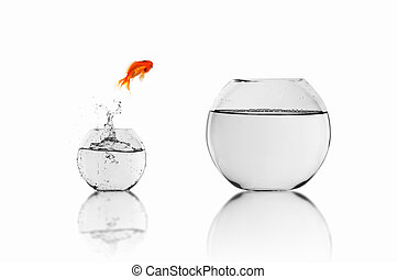 gold fish in a fishbowl - gold fish jumping out of water in...
