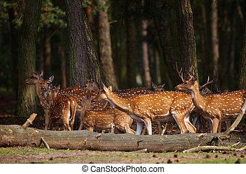 Herd of deer in a dark forest