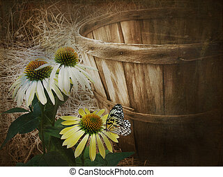 butterfly on cone flower - Butterfly on cone flower with...