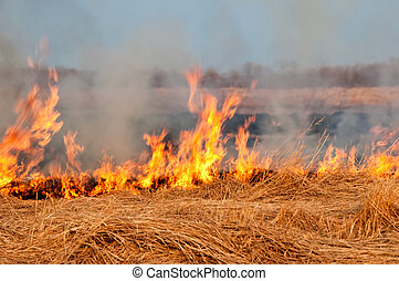 Fire on the nature - The fire on the nature - burns a grass...